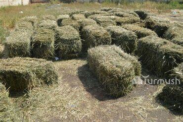 Животные - Байтик: Продаю сено (клевер), тюки. Самовывоз с Воронцовки