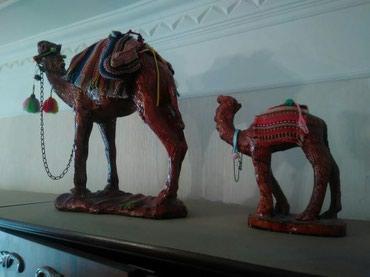 Sumqayıt şəhərində Boyuk devenin ayaq hissesinde bir az deffekti var. ikisi bilrikde 15