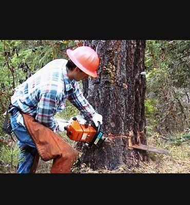 Ağaç kesimiAgaclarin budanmasi kesilmesi qol budaginin temizlik