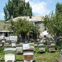 Şamaxı şəhərində Şamaxıda yaza çıxmış arılar satılır.ArılarŞamaxının