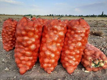 стяжка пола цена in Кыргызстан | БЕТОННЫЕ РАБОТЫ: Продаю лук оптом. Цена со склада 15 сом. С поля цена 10 сом. Сорт