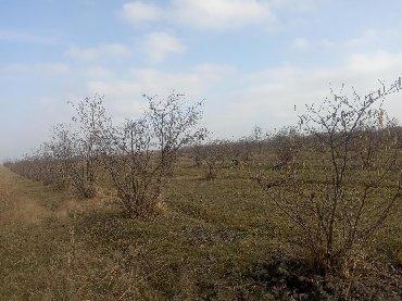 torpaq satışı - Xaçmaz: Satış 250 sot Kənd təsərrüfatı mülkiyyətçidən
