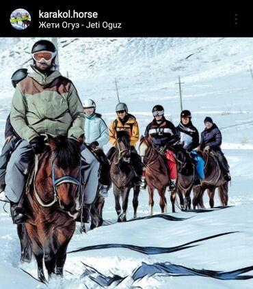 20 объявлений | ОТДЫХ НА ИССЫК-КУЛЕ: Конные прогулки