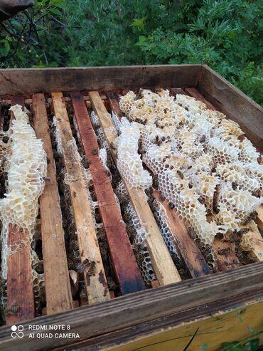 Продаю токтогульский горный мёд натуральный из собственной пасеки