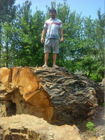 Пилю дрова продаю дрова в Бишкек