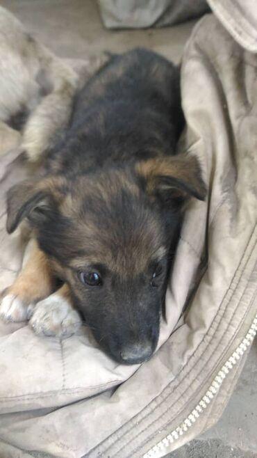 Милая собачка Леди, была найдена на улице, а шея перетянута плотной