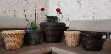 садовые растения в Кыргызстан: Продаются ротанговые кашпо для комнатных растений, туй, небольших