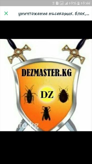 в Лебединовка: Уничтожение насекомых. блох, клопов, тараканов и других насекомых. без