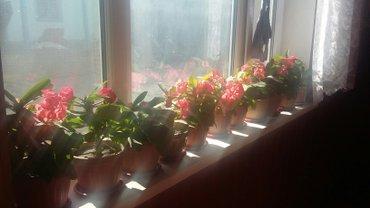 цветы в Сокулук