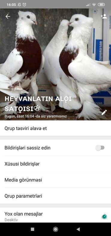 ev bag alqi satqisi - Azərbaycan: Bütün növ heyvan ların alqı satqısı isdəyən nömrəsini yazsın Vatsap