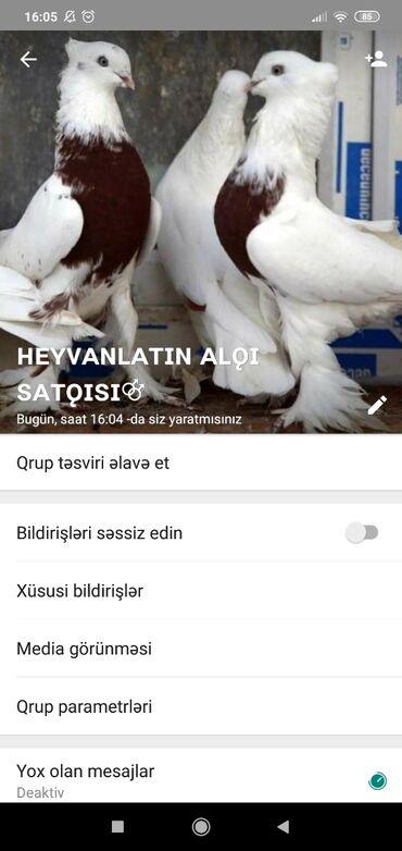 ev alqi satqisi heyet evleri - Azərbaycan: Bütün növ heyvan ların alqı satqısı isdəyən nömrəsini yazsın Vatsap