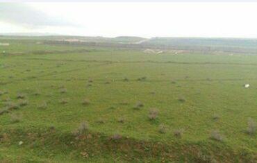 Недвижимость - Ахсу: Продам 4500 соток Для сельского хозяйства от собственника