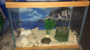 Bakı şəhərində 27*15sm akvarium  aksesuarlarla birlikde 20-25azn arasi deiwir