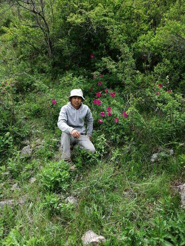Разнорабочие в Ак-Джол: Опытный строитель ишит роботу