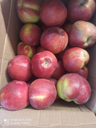 73 объявлений: 15 тонн яблок