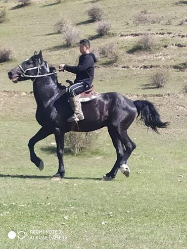 Животные - Исфана: Лошади, кони