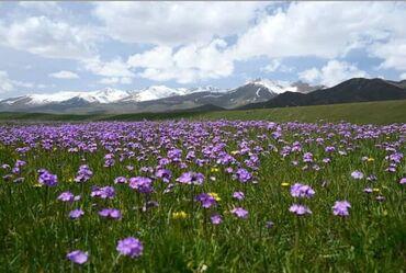 пятинитка в Кыргызстан: Утюжник. 3-5 лет опыта