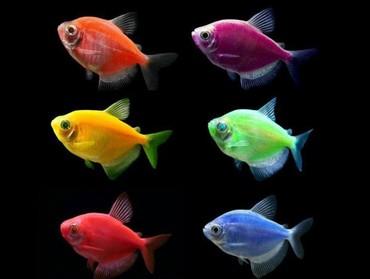 bmw-3-серия-328xi-mt - Azərbaycan: Glo fish böyük və kiçik ölçudə 3-4 azn