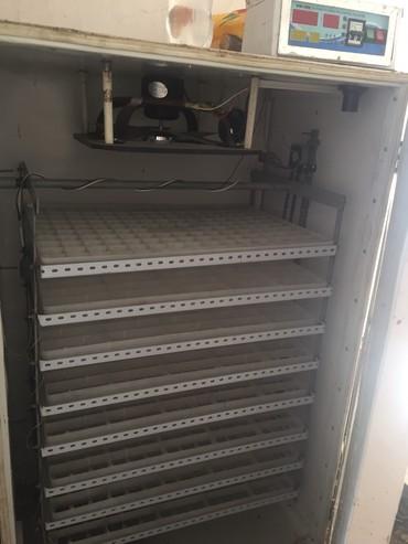 Зоотовары - Кок-Ой: Продаю б/у инкубатор на 1200 яйиц, или меняю на скот. Состояние нету д