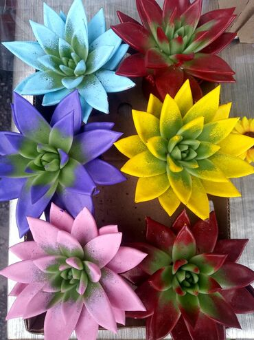 Продаю цветы цветок каменная роза из Голландии цена 320 сом