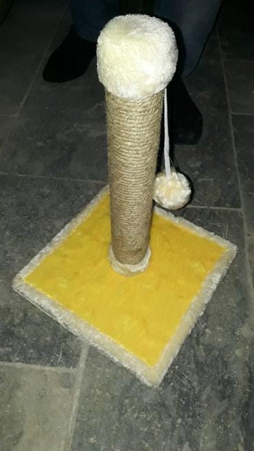 Bakı şəhərində Pisiklerin oynamasi ve dirnaqlarin temizlenmesi ucun Teze Kaktitocka.