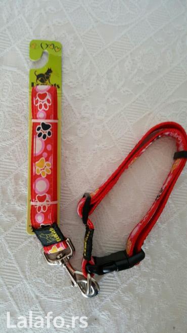 Ovodac +ogrlica novo - Krusevac