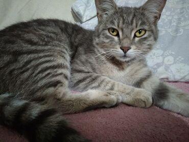 Животные - Новопокровка: Крысылов. Котик ищет хозяев. Чистый ухоженный. Возраст годик. Очень ла