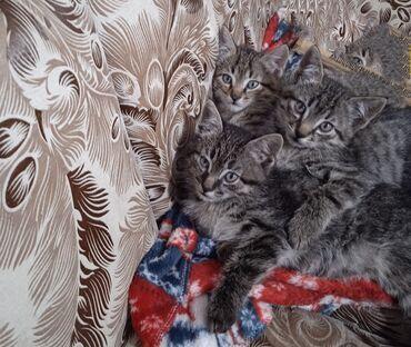 242 объявлений | ЖИВОТНЫЕ: Отдаю бесплатно этих симпатичных котят ( все три мальчика)