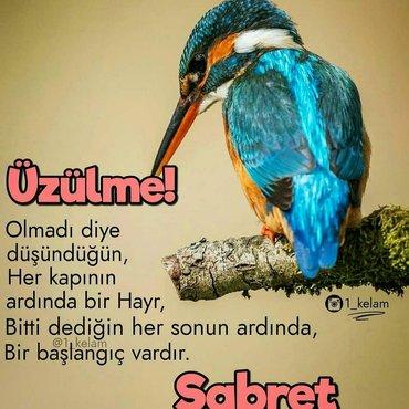 daye isleri - Azərbaycan: Ev isleri ve daye isi axtariram.tecrubem var.aileliyem