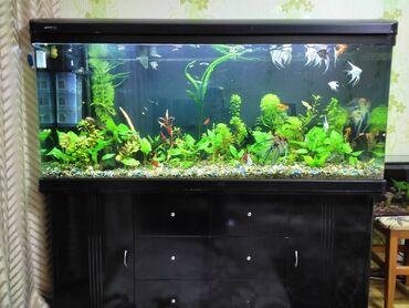 104 объявлений   ЖИВОТНЫЕ: Продаю заводской аквариум со всем оборудованием,рыбами и растениями