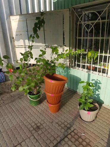 Комнатные растения - Беловодское: Продаются домашние цветы. Село Беловодск рядом с РСК БАНК