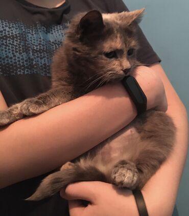 Нужен дом для Кошечки. Кошечка стериливана. Кошечке около двух лет. Бы