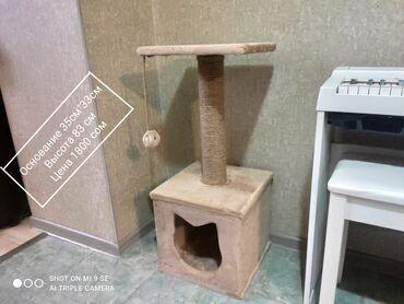 Дом для кошек. Высота 83 см .Цены ниже рыночных. Домик 35см*33см. Есть