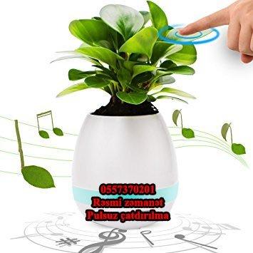 Bakı şəhərində Oxuyan dibçək.Playing smart music flowerpot