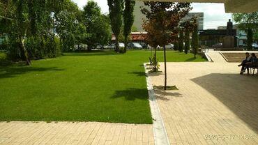 Сеем газон, системы полива, ландшафтный дизайн и многое, многое другое