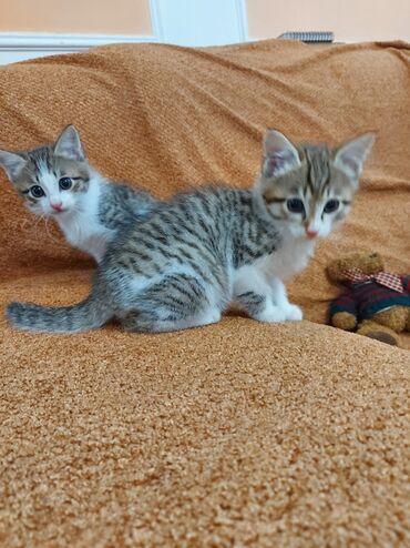 Отдаем в добрые руки котят, два мальчика, родились 1 марта