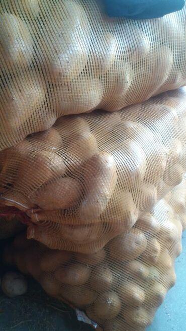 Продаю картошки мешок 850 сом Кочкор сорт желе картошки большие мешок