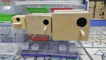 переноска для кошек бишкек in Кыргызстан | ЗООТОВАРЫ: Гнезда для канарейки для амадин для волнистых и больших корел, розе
