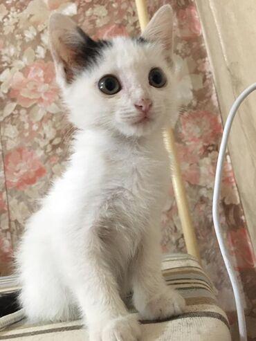 Посмотрите какой прекрасный котёнок! Мальчик. Ласковый игривый от