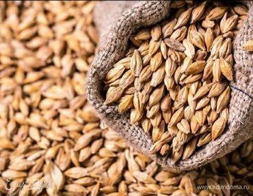 Семена и уличные растения в Кашат: Арпаячмень. 14сом 4тонна в мешках Кемин район с.Чым-Коргон