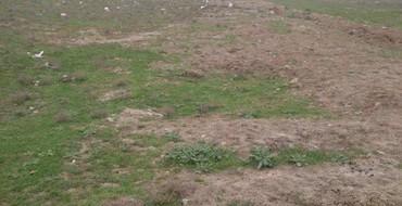 Bakı şəhərində 10 sot torpaq Tovuz rayonunda, Qovlar qesebesi.