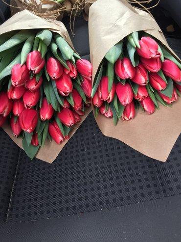 Принемаем заказы на тюльпаны к 14 в Токмак