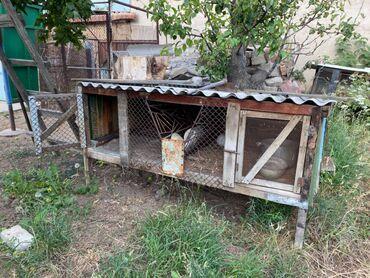 Животные - Чолпон-Ата: Клетки для кроликов, двойные, одиночные. Размеры можно уточнить по