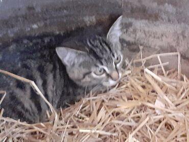 Животные - Каракол: Отдадим хорошеньких котят в добрые руки