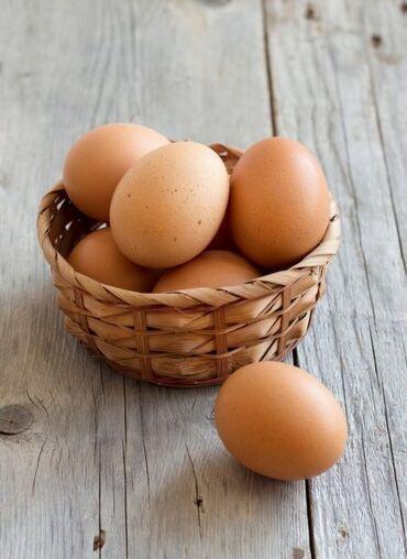 купить домашний музыкальный центр в Кыргызстан: Куплю куриное домашнее яйцо для инкубации!!!. В северо-западной части