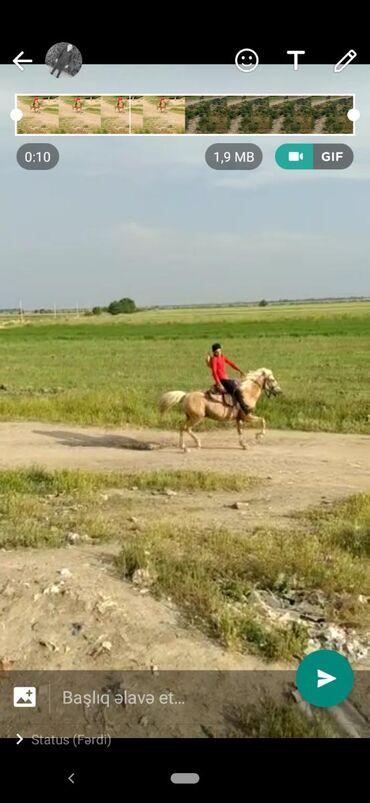 bmw-1-серия-118d-at - Azərbaycan: Erkək at 8 yaşi var 40 yorgasi heç bir prablemi yoxdu əlaq Agdam rayon
