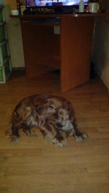 Pansion za pse u porodičnom okruženju. Uslužna briga o vašem ljubimcu  - Beograd