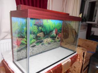Bakı şəhərində Teze akvarium 120 litrelik qapaqi var qapaqinda iwiq ucun yeri var