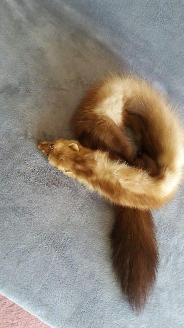 Krzneni kaputi - Paracin: Perfektna cela kunica duzine 95 cm. Krzno gusto i bogato stipaljka