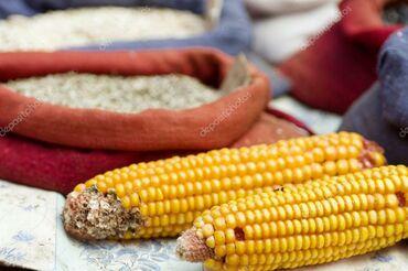 Срочно продаю кукурузу в початках затаренная в мешках. 10 тонн